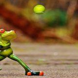 つくば市近郊のテニススクールまとめ